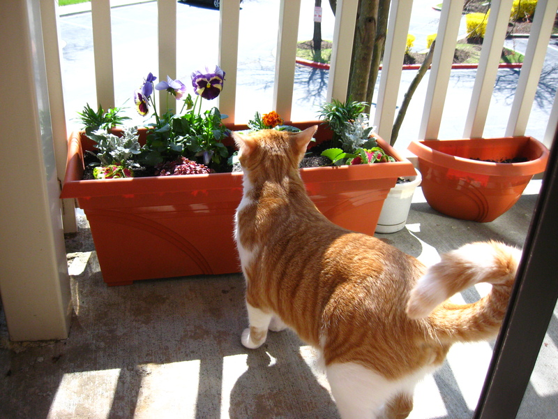 2 Top Balcony Garden 3 Calvin Inspection